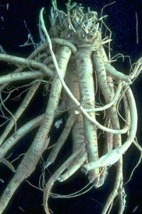 Bitkiler ve Sakinleştirici Etkileri 4